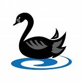 foto of black swan  - emblem with black swan floating on water - JPG