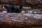 picture of begging dog  - sad dog in dog shelter in autumn