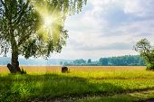 foto of birching  - Beautiful big birch tree in a meadow with sunny beams - JPG
