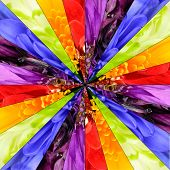 picture of symmetrical  - Rainbow Flower Center Symmetric Collage Made from Collection of Various Multi Colored Wildflowers - JPG