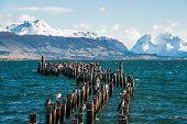 pic of natal  - King Cormorant colony Old Dock Puerto Natales Antarctic Patagonia Chile - JPG