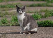 foto of homeless  - Homeless gray cat with a bad eye - JPG