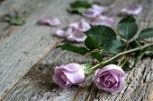 stock photo of purple rose  - Garden purple roses bouquet on rustic wooden table side view with copy space - JPG