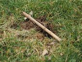 pic of mole  - Setting a mole trap in a domestic garden  - JPG