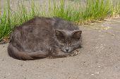 picture of homeless  - Sad homeless cat lying on the asphalt - JPG