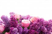 stock photo of purple white  - Border of purple Lilac flowers with pink roses isolated on white background - JPG