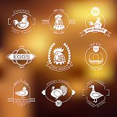 picture of poultry  - Set of poultry farm logo and emblem - JPG