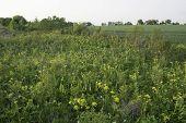 stock photo of prairie  - Original Wisconsin prairie at the edge of a wheat field - JPG