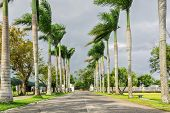 picture of tree lined street  - Palm lined driveway with fence and park benches - JPG