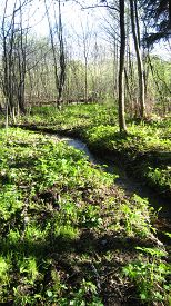 pic of marshlands  - Forest brook and grass marshland landscape sunny weather - JPG