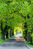 Green Spring Trees In Alley poster