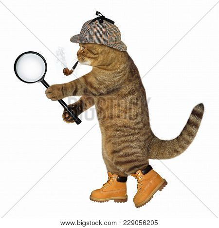 The Cat Detective With A