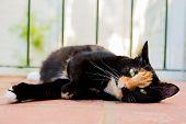 Beautiful Calico Tortoiseshell Tabby Cat Lying On A Balcony poster