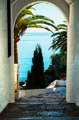 Beautiful Spreading Palm Tree On The Beach, Exotic Plants Symbol Of Holidays, Hot Day, Big Leaves poster