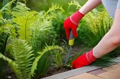 Photo Of Gloved Woman Hands With Tool Removing Weed From Soil. poster