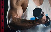 Muscular Arms Doing Biceps With Dumbbells In The Gym poster
