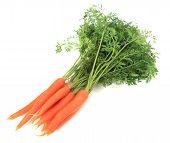 foto of crudites  - Bundle of fresh carrots - JPG