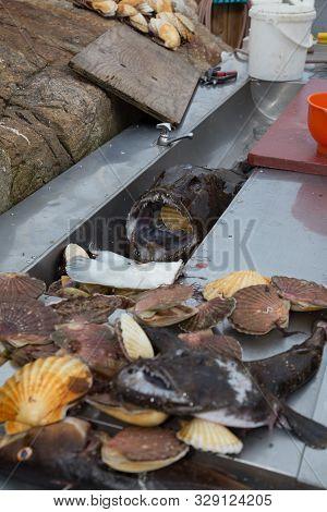 poster of Norway Sea Caught Fish Norway North Scandinavia