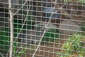 An Image Of A Fragment Of A Metal Mesh Of An Animal Enclosure poster
