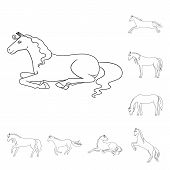 Isolated Object Of Stallion And Galloping Sign. Collection Of Stallion And Riding Stock Symbol For W poster