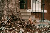 Adorable Fur Brown Squirrel Neat Large Tree. Posing To The Camera Squirrel. Climbing On Tree. Octobe poster