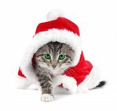 Green Eyed Tabby Kitten With Christmas Outfit