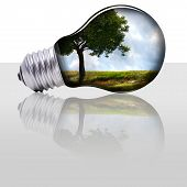 picture of photosynthesis  - bulb with a tree and a field inside - JPG