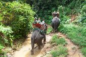 KHAO SOK, THAILAND - NOV 13: Unidentified people on the elephant trekking in Khao Sok National Park.