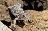 image of gekko  - Gecko on some bark on the sand  - JPG