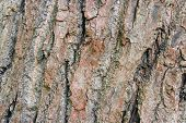 Tree bark background