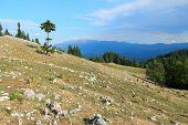 picture of mica  - Piatra Craiului National Park in Romania  - JPG