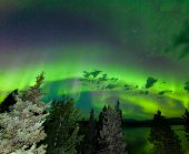 Intense Green Aurora Borealis Over Boreal Forest