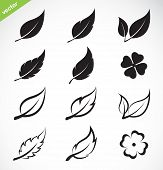 picture of red clover  - Vector leaves icon set on white background - JPG