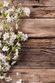 Spring white blossoms on wooden planks surface. Free space for text
