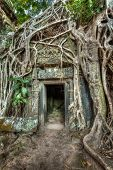 High dynamic range (hdr) image of ancient stone door and tree roots, Ta Prohm temple ruins, Angkor,