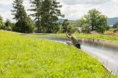 picture of luge  - Young man enjoying summer sledge ride - JPG