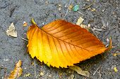 autumn leaf on ground