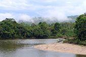 foto of rainforest  - Amazon View of the tropical rainforest Rio Napo Misahualli Ecuador  - JPG