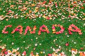 stock photo of canada maple leaf  - The words Canada written with maple leaves - JPG