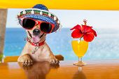 foto of hot dog  - funny cool chihuahua dog drinking cocktails at the bar in a beach club party with ocean view - JPG