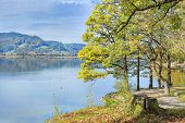image of bavaria  - Image of a park with trees and meadow at lake Kochelsee in Bavaria Germany - JPG