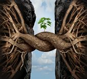 stock photo of tree leaves  - Unity growth concept and bridge the gap business symbol as two tree roots on a high steep cliff connecting and merging together bridging together to form a new sapling as an icon of partnership success and strength - JPG