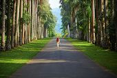 pic of walking away  - The girl walking down the road surrounded by palm trees to the mountains far away - JPG