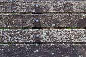 foto of lichenes  - Old park bench wood with lichen on it for a nice textured background - JPG