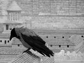 stock photo of raven  - A large grey raven on a replica of Jerusalem - JPG