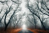 picture of crimea  - Fog in the Forest - JPG