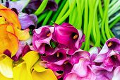 picture of calla  - Multicolored calla lily flower floral pattern abstract background - JPG