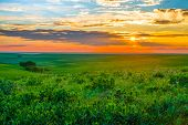 picture of kansas  - Sunset in the Flint Hills of Kansas with Cattle grazing in the far background - JPG