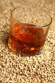 pic of tumblers  - Tumbler glass with whiskey standing on barley malt grains - JPG