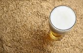 image of malt  - Tall glass of light beer standing on barley malt grains - JPG